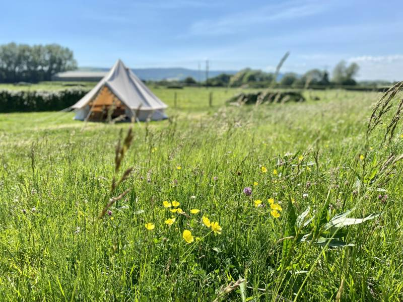 Kings Barn Camping