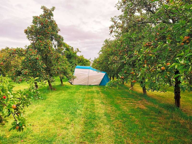 Orchard Tent Pitch