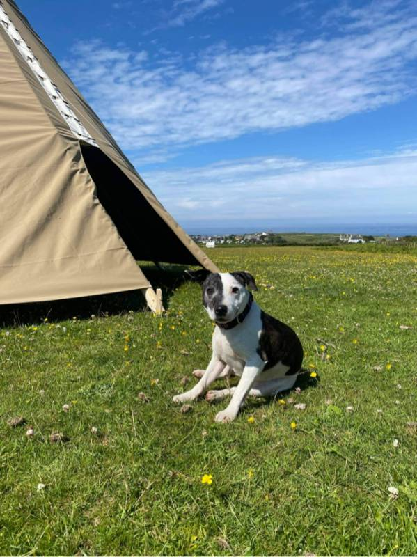 Sea Tipi - Front Field Camping