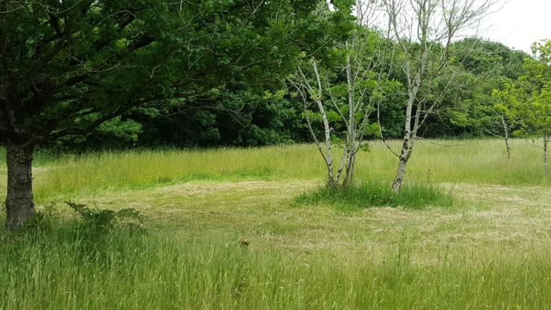 Cyclist's Grass Pitch 4