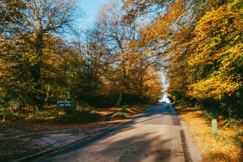 All the Leaves are Brown - Six Great Autumn Breaks!