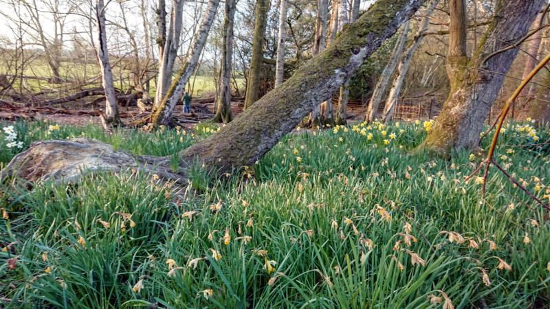 The Sunset Tree Home Farm, Staplefield, Sussex RH17 6AP