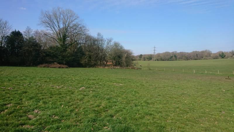 Quiet Grass Pitch