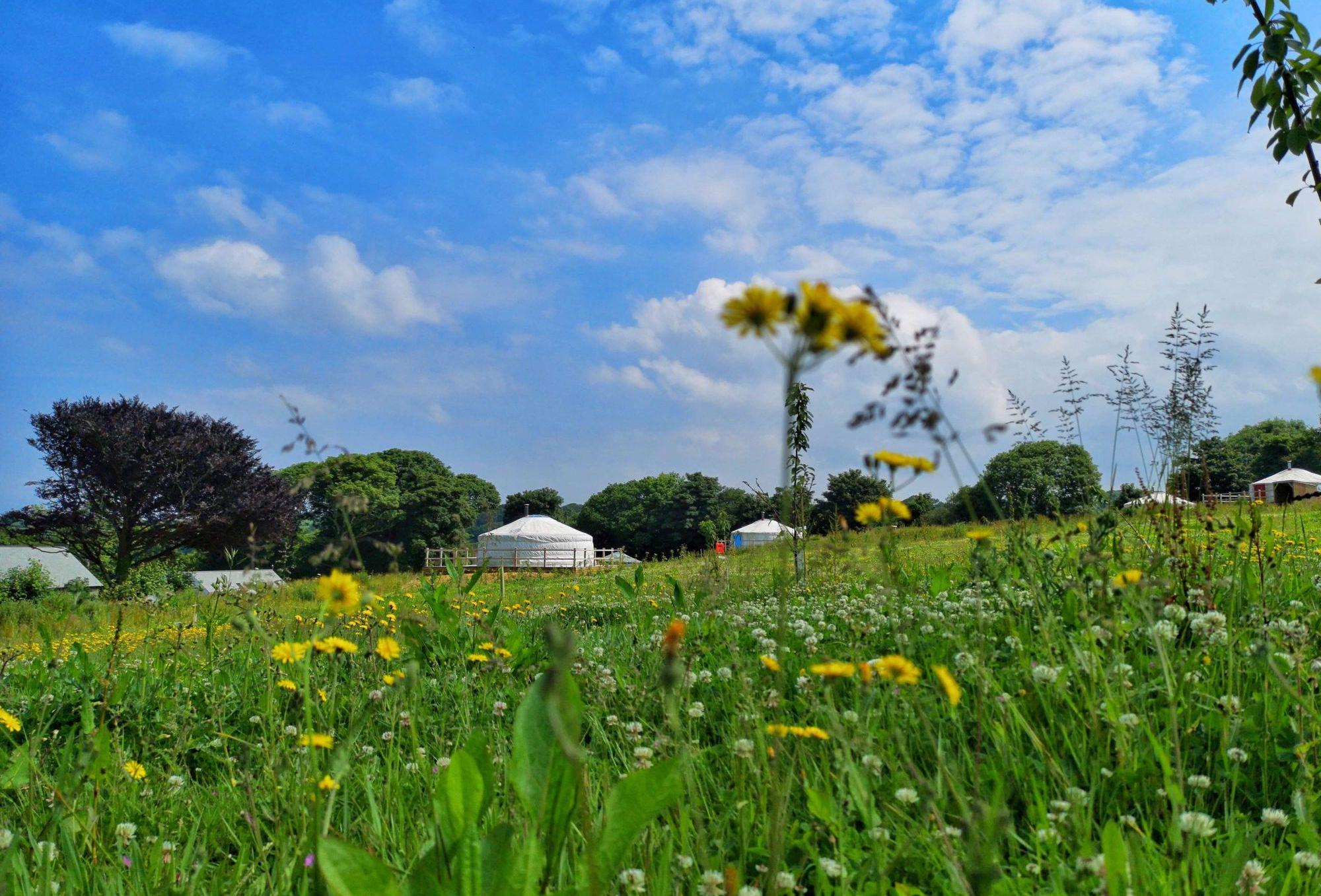 Glamping at Fir Hill , Cornwall