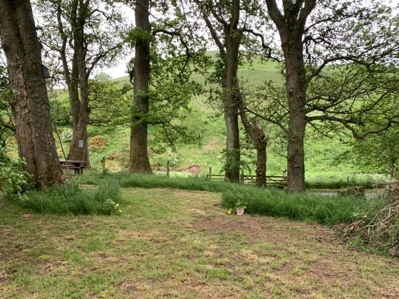 Woodland Wild Pitch