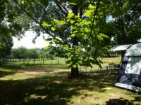 (RT) Rental Tent