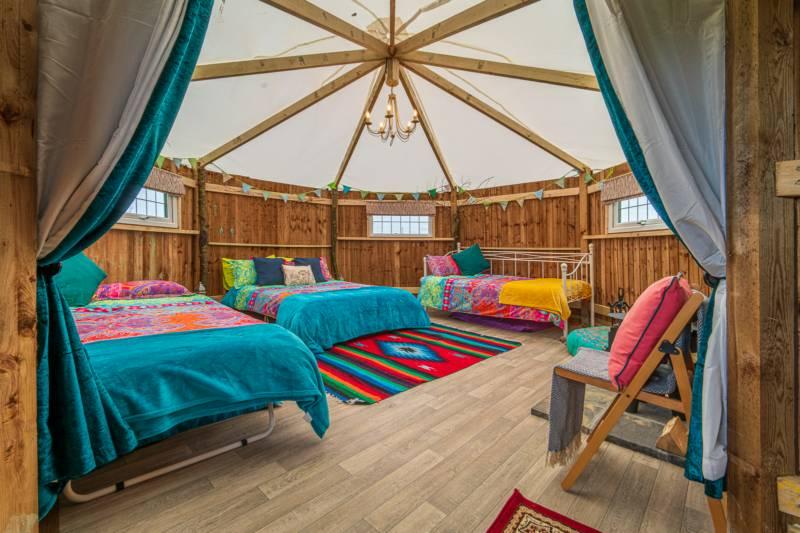Timber Tent Caterpillar