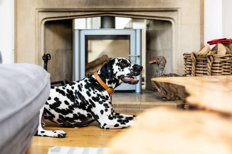 Canine Cottages Travel Chapter House, Gammaton Road, Bideford, Devon EX39 4DF