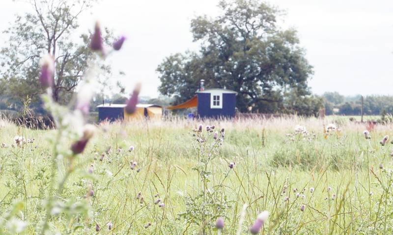 Shepherd's Hut - June