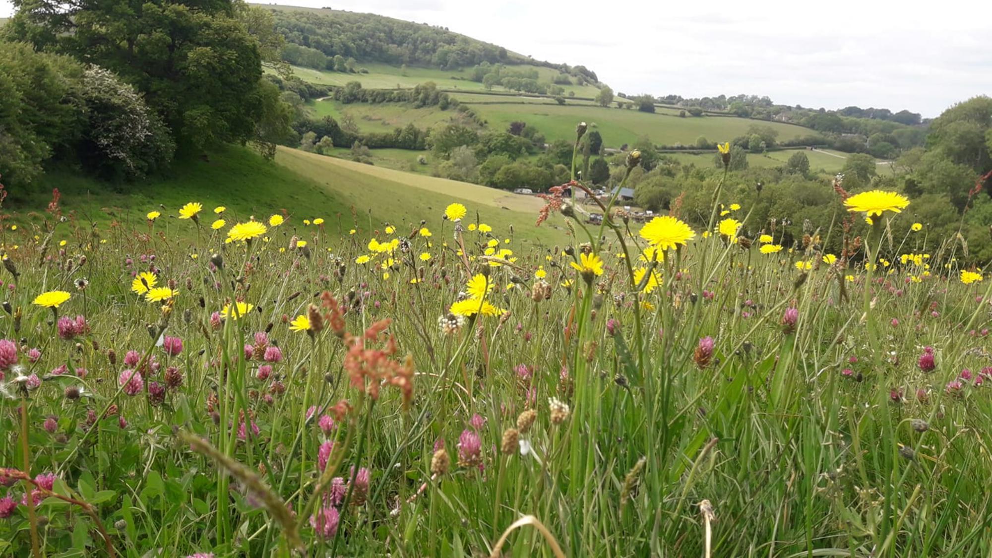 Campsites in Dorset – I Love This Campsite